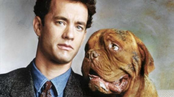 Najlepsze filmy z psami. Co warto obejrzeć?