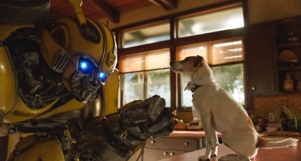 Bumblebee – słabe wyniki filmu w Box Office. Obsada komentuje