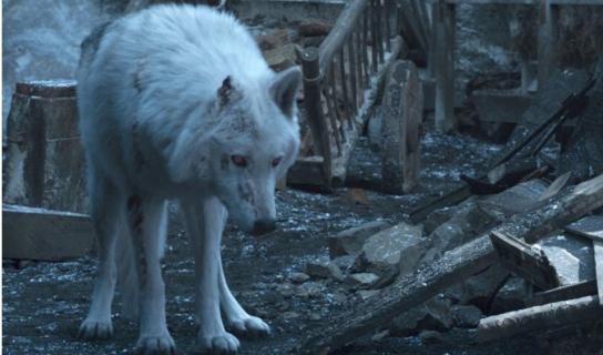 Gra o tron - tak wyglądał Duch na planie 8. sezonu