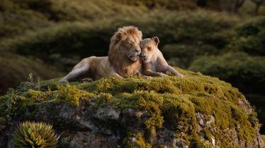 Król lew 2019 - szczery zwiastun filmu
