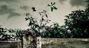 Zatruty ogród – recenzja książki